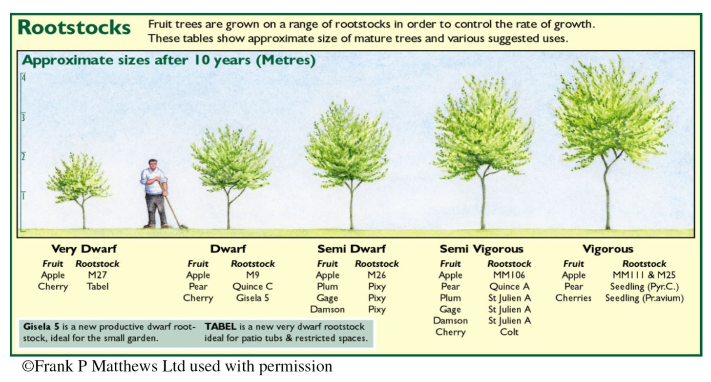 Fruit Tree Rootstocks